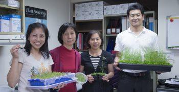 尋找葉綠體內存在億萬年的蛋白質橋樑,解開光合作用之謎