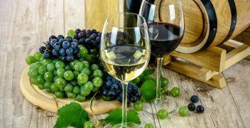 品酒與好食物的距離:怎麼用吃來拯救世界──2019泛知識節