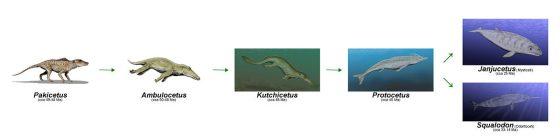 《從陸地到海洋,鯨魚「斷捨離」了哪些基因適應?》
