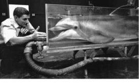 海豚實驗的悲劇始末與藝術家描繪的「生下海豚」——15 萬赫茲的悲鳴(二)