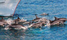 保育鯨豚,就是保護海洋生態──《23.97 的海洋哲思課》