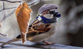 麻雀雖小,也懂用藥!破解山麻雀的挑屋守則,原來個個都是驅蟲大師?