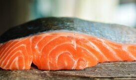 先別管「鮭魚之亂」了,關於鮭魚你又知多少?