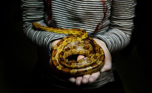 https://pixabay.com/zh/photos/snake-girl-holding-person-young-3064737/https://pixabay.com/zh/photos/snake-girl-holding-person-young-3064737/
